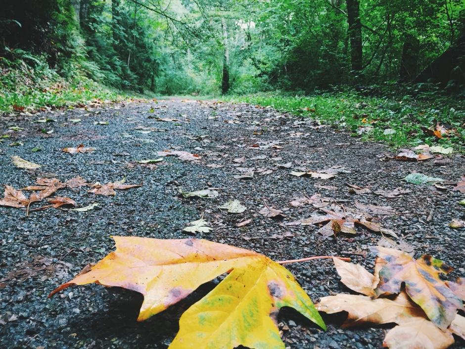 fall-woods