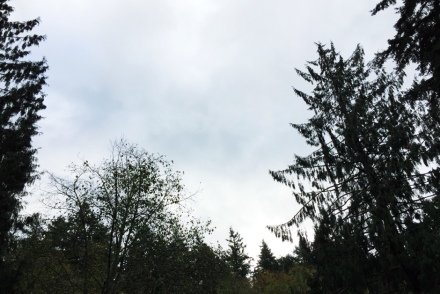 cloudy sky and trees