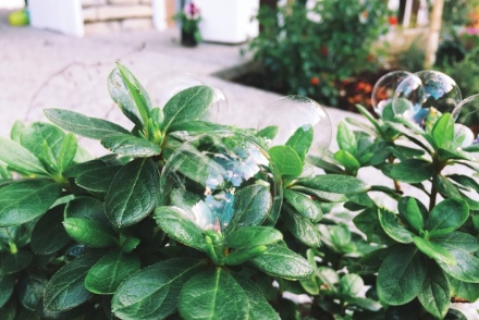 bubbles on plants