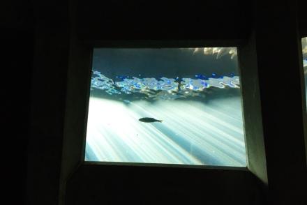sunlight in aquarium