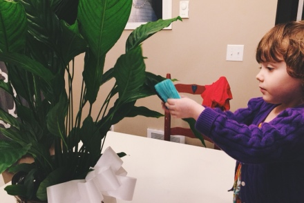 putting socks on plants